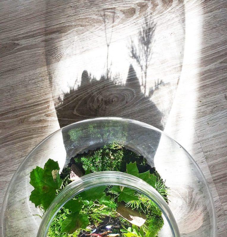 cień lasu