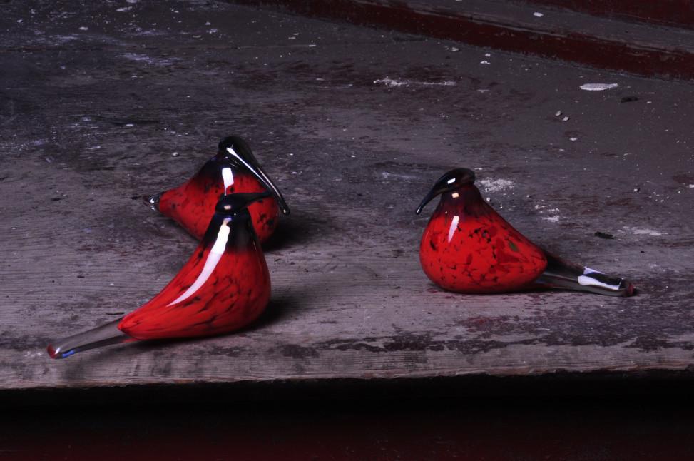 ptaki 8h